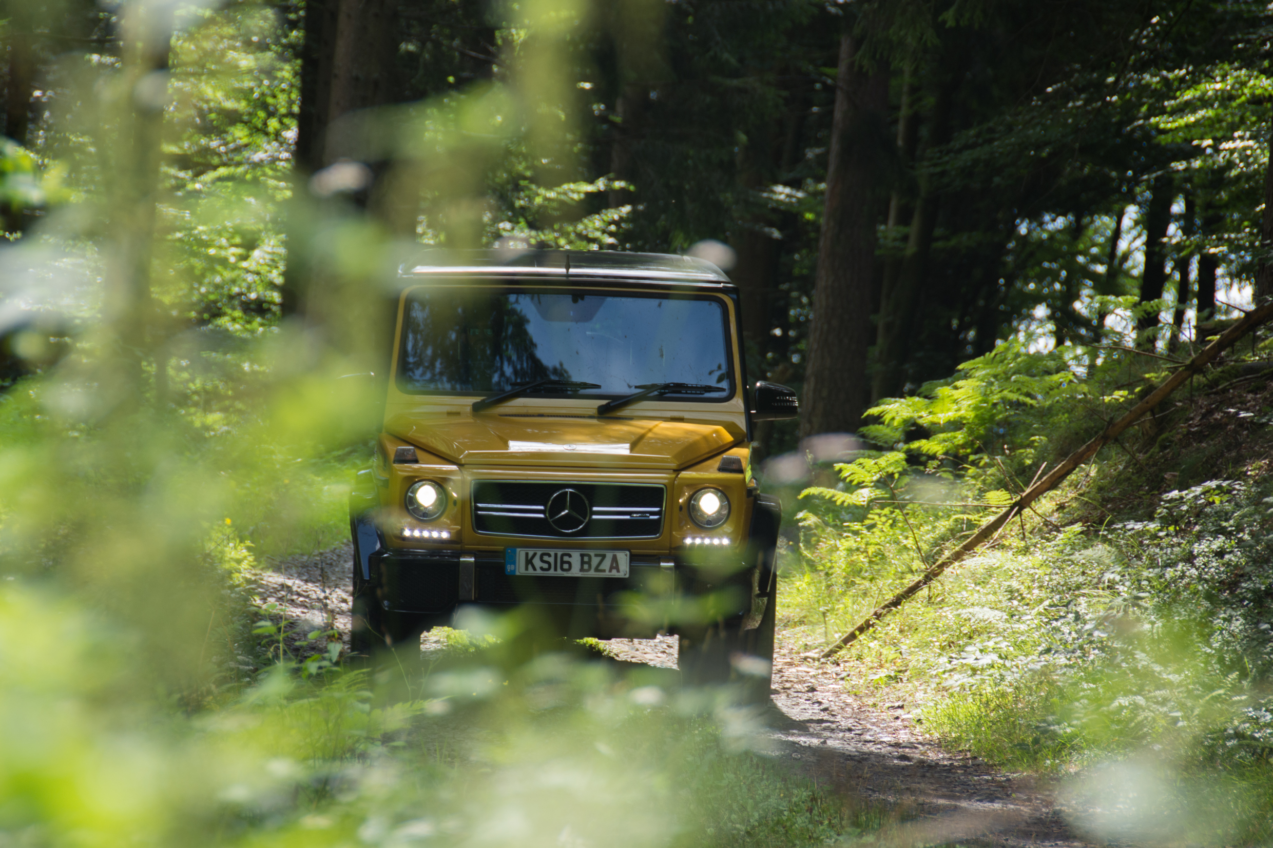 Mercedes-AMG G 63 in a forest